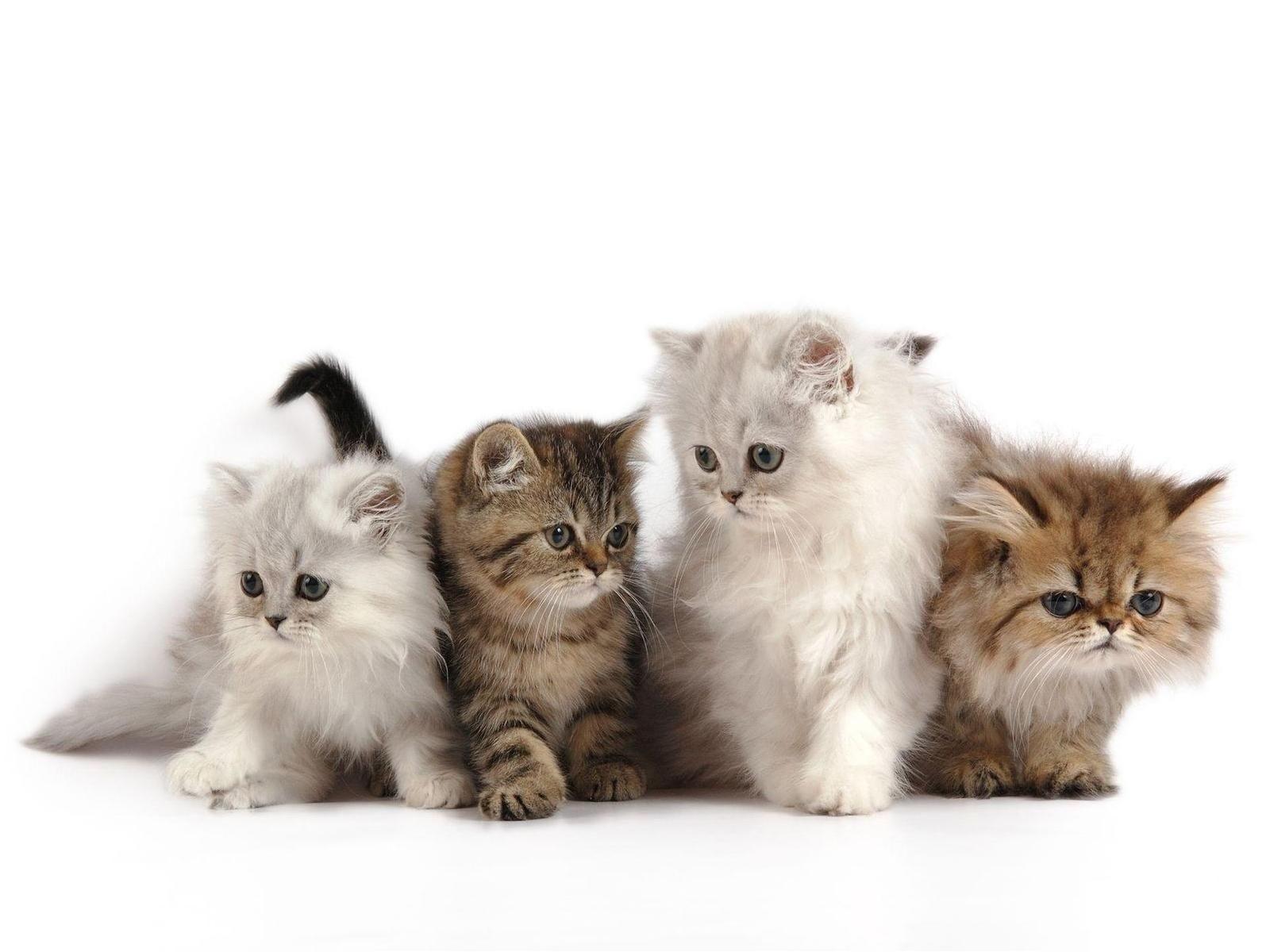 Como cuidar de Adorables y Preciosos Gatitos