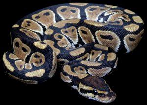 10 hechos flipantes sobre las serpientes