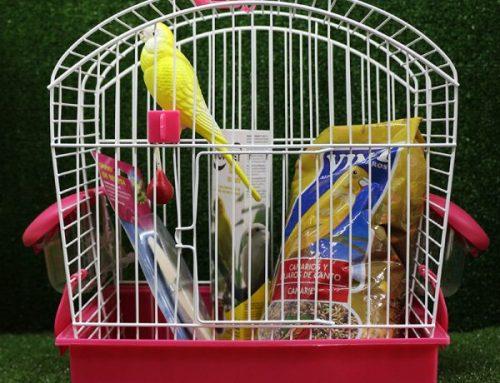 Un canario como mascota