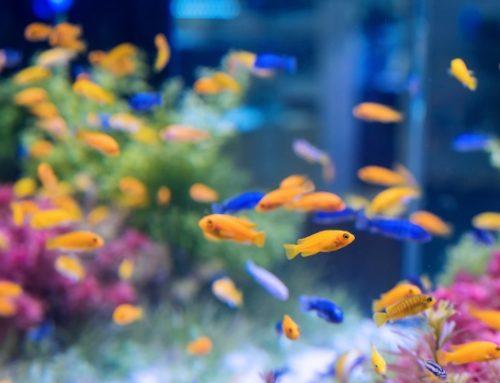 Accesorios para acuarios