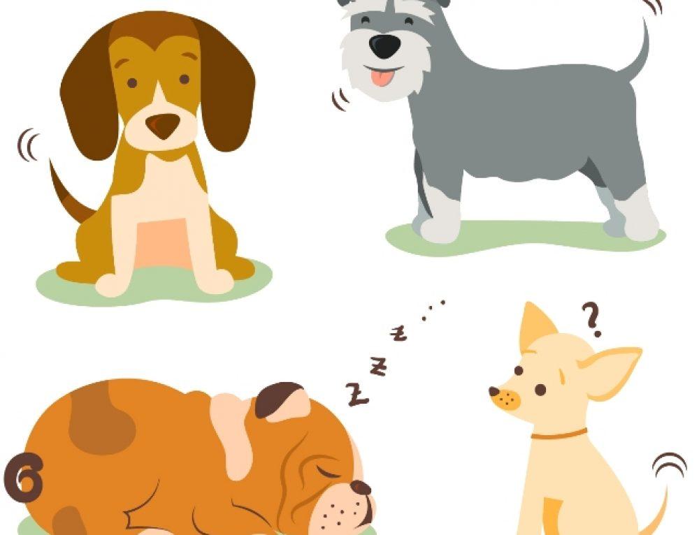 El cuidado de tu perro, antiparasitarios, desparasitarios y  prevención.
