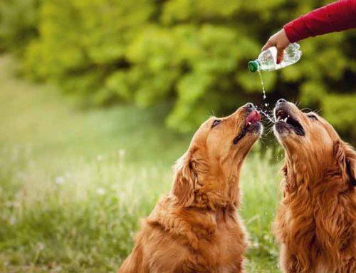 Calor y mascotas