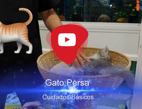 Consejos y Accesorios Fundamentales para el Cuidado de tu Gato 