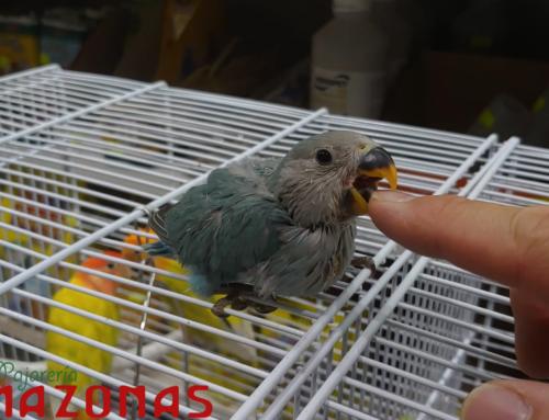 Pajarería Amazonas en Oviedo | Aves exóticas