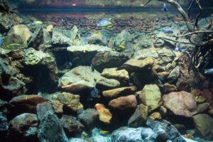 paisajismo acuático: rocas y raíces
